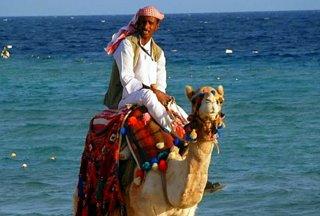 Ägypter auf dem Kamel am Strand von Safaga