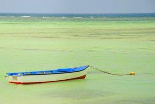 einsames Boot am Strand der Domrep
